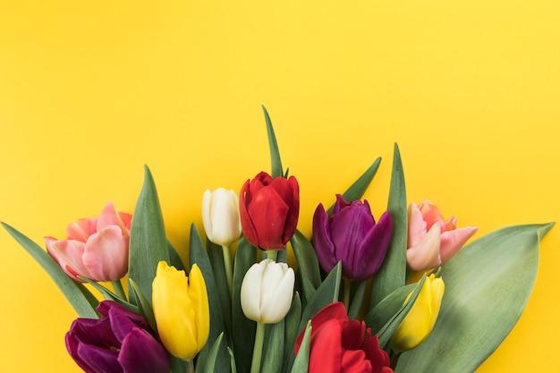 Many fresh colorful tulips against yellow background Free Photo