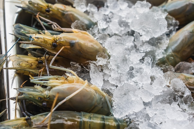 Many large fresh shrimps on ice, in a supermarket. fresh raw seafood in asian traditional fresh market Premium Photo