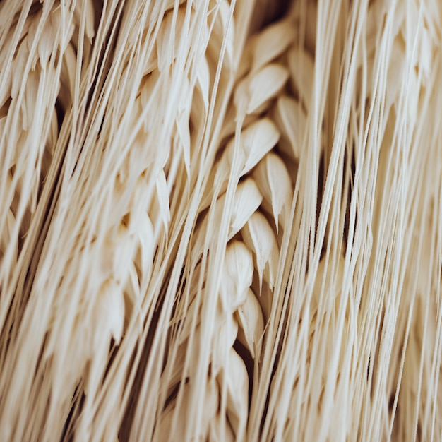 Many light wheat fibers and grains Free Photo