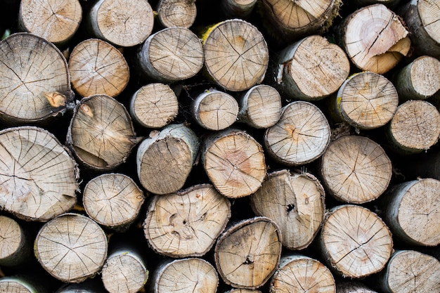 Many logs are arranged in rows Premium Photo