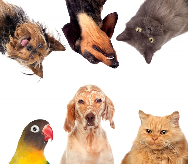 Many pets isolated Premium Photo