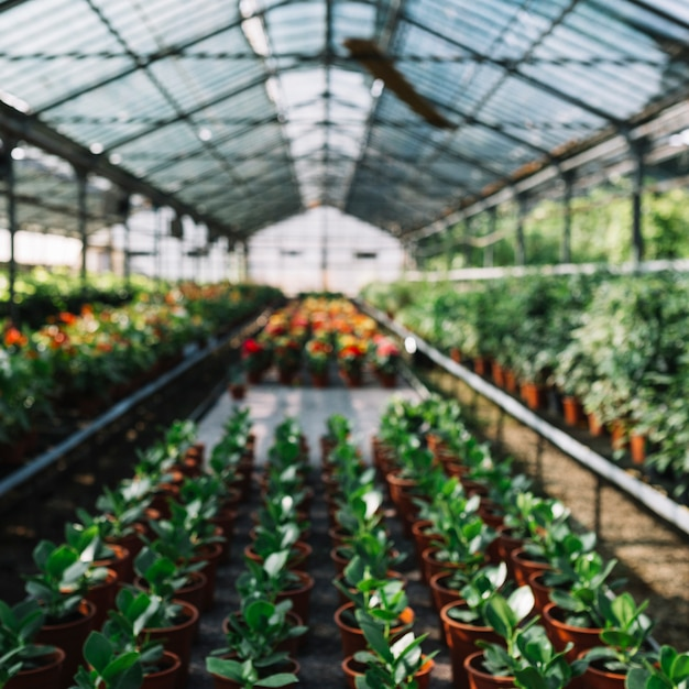 Many potted plants growing in greenhouse Free Photo