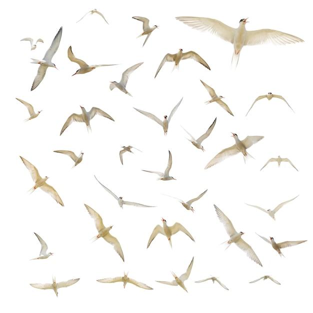 Many seagulls isolated Free Photo