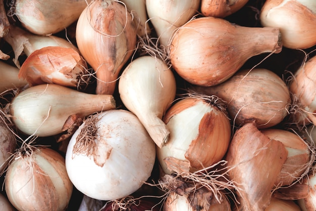 Many small onion bulbs for planting, different varieties of onions Premium Photo