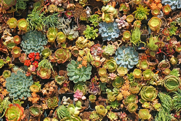 how to display succulents 30 cute examples.htm many species of fresh succulent plants in the succulent garden  many species of fresh succulent plants