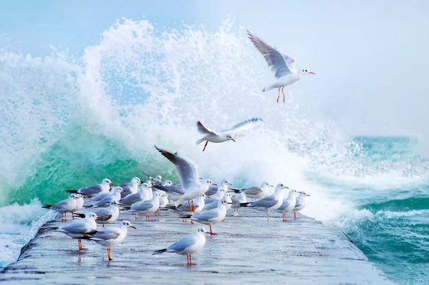Many white gulls on the pier in a storm Premium Photo