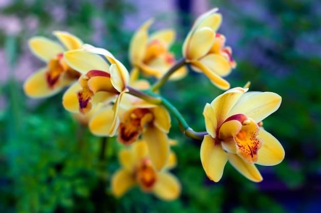 枝に赤い水しぶきを持つ多くの黄色い花 Premium写真
