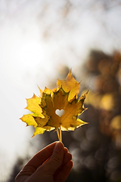 Maple leaf in a hand on bluured nature . autumn season. yellow leaf Premium Photo