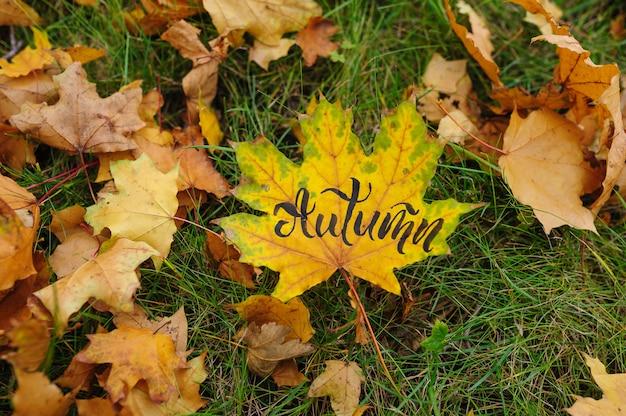 Кленовый лист в осеннем парке с каллиграфическим словом осень   Премиум Фото