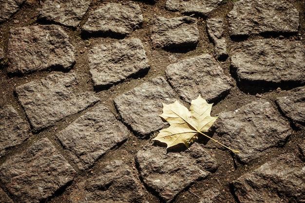 石舗装スラブの背景にカエデの葉 Premium写真