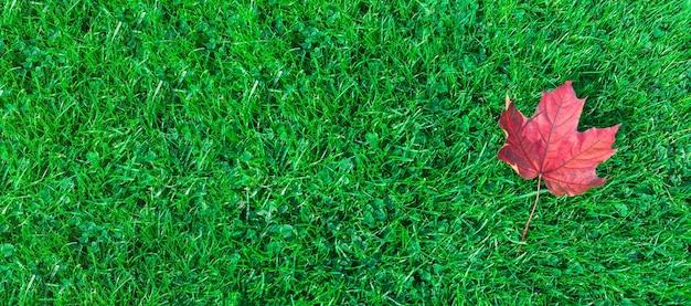 緑の草のカエデの葉 Premium写真