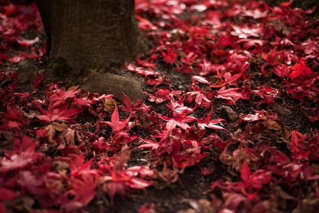 단풍 나무 잎이 땅에 떨어졌습니다. 무료 사진