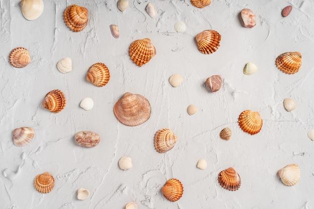 바다 조개와 대리석 배경입니다. 휴가 패턴 프리미엄 사진