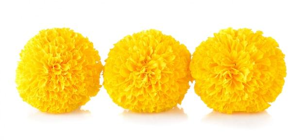 Marigold flower on white Premium Photo