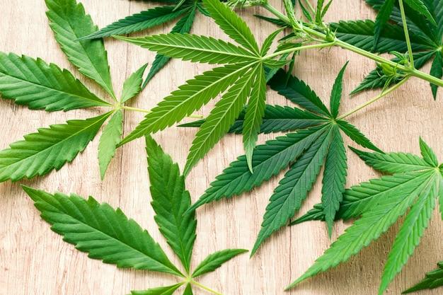 Marijuana green leaves on a wooden table Premium Photo