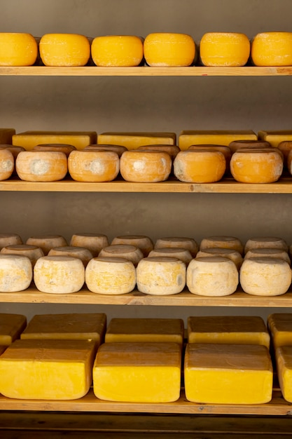 Matured cheese wheels on shelfs Free Photo