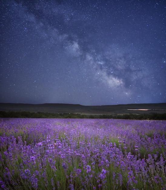 Луг лаванды ночью. Premium Фотографии
