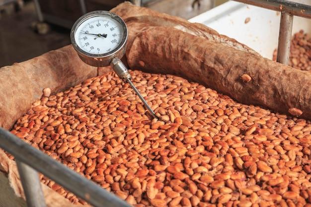 発酵したカカオ豆の温度を測定します。 Premium写真