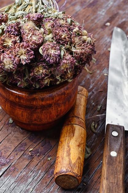 Medicinal plant hypericum Premium Photo