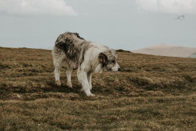 Cane grigio e bianco a pelo corto medio su una collina verde sotto con le montagne Foto Gratuite