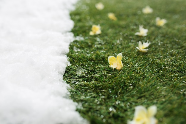 冬と春のコンセプトの背景の間に、白い雪と緑の草と花の出会いがクローズアップされます。 無料写真