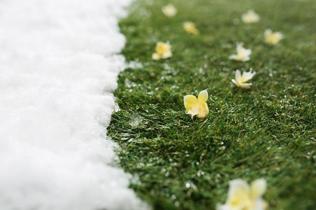 Incontro con la neve bianca e l'erba verde con fiori da vicino - tra l'inverno e la primavera sfondo del concetto Foto Gratuite