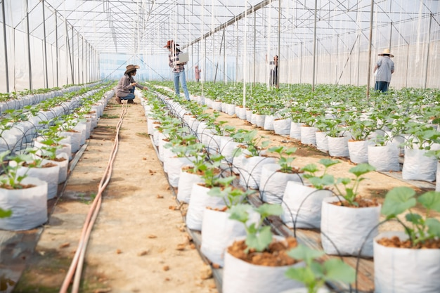 Melons plantation with workers Free Photo