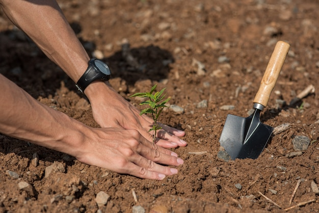 Men plant trees in the soil to conserve nature. Free Photo