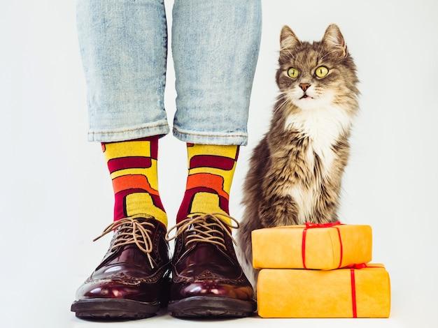 メンズレッグ、スタイリッシュな靴、柄のカラフルな靴下、グレーのふわふわの子猫。 Premium写真