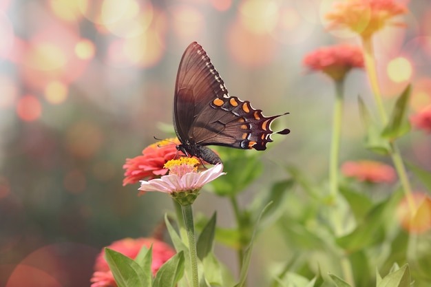 Mesmerizing macro picture of a little black satyrium butterfly on a pink flower Free Photo