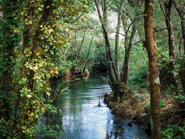 Scenario affascinante di alberi di pino e bellissimo lago Foto Gratuite