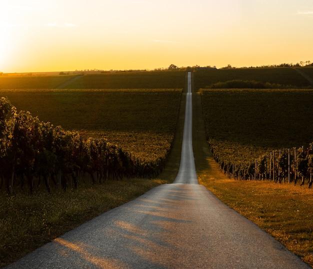日の出の間に黄金の畑に変わるブドウ畑の魅惑的なビュー 無料写真