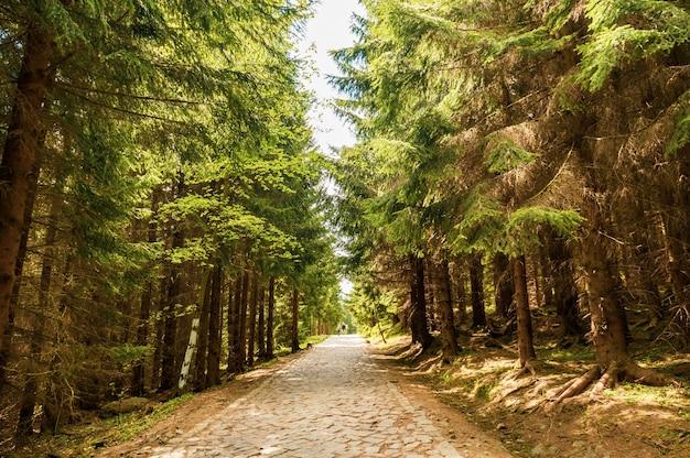 화창한 날 공원에서 나무로 둘러싸인 통로의 매혹적인 전망 무료 사진