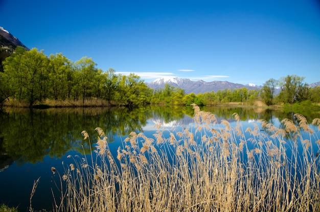 山のある水の中の木々と空の反射の魅惑的な景色 無料写真
