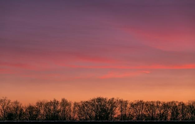木の枝の後ろに日没時に空の魅惑的なビュー 無料写真