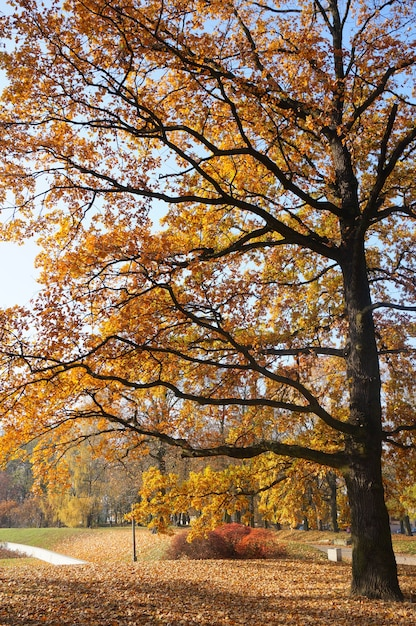 公園の黄色の葉と背の高い木の魅惑的な景色 無料写真