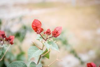 メキシコの植物相赤 無料写真