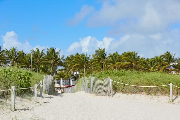 Miami beach entrance with palm trees florida us Premium Photo