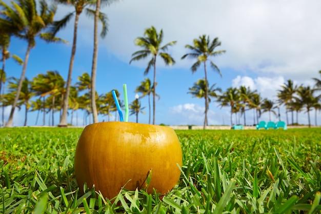 Miami south beach 2 straws coconut florida Premium Photo
