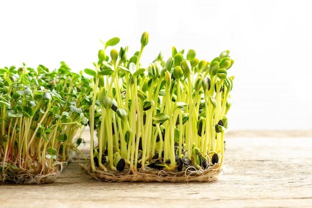 Micro verdi. semi di girasole germinati, fine in su. Foto Gratuite