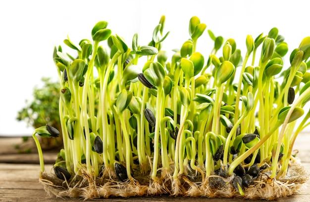 Микро зелень. проросшие семена подсолнечника, крупным планом. Бесплатные Фотографии