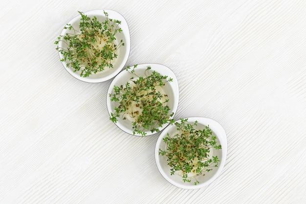 Микро зелень растет в небольшой круглый шар на белом деревянном. доморощенные семена рукколы. здоровая вегетарианская еда. квартира лежала. Premium Фотографии