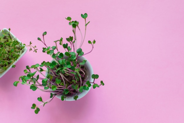 Microgreen kress, pink radish sprouts on pink , flat lay, top view, copyspace Premium Photo