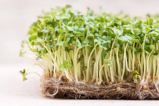 Microgreen. проросшие семена горчицы на льняной циновке крупным планом Бесплатные Фотографии