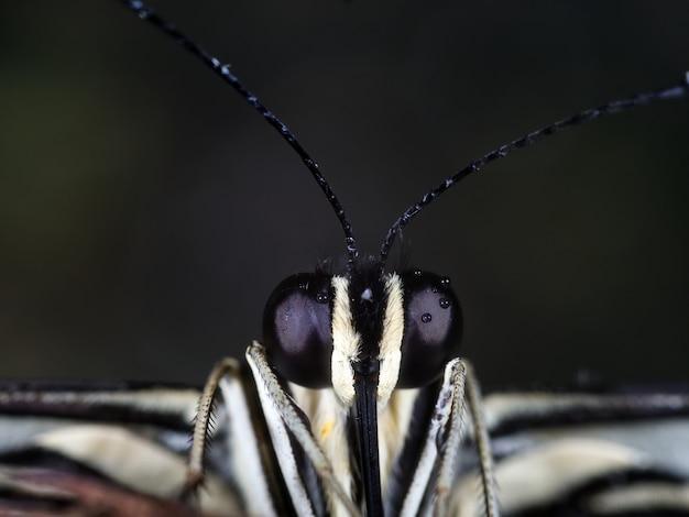 Микрофотография черно-белого насекомого Бесплатные Фотографии