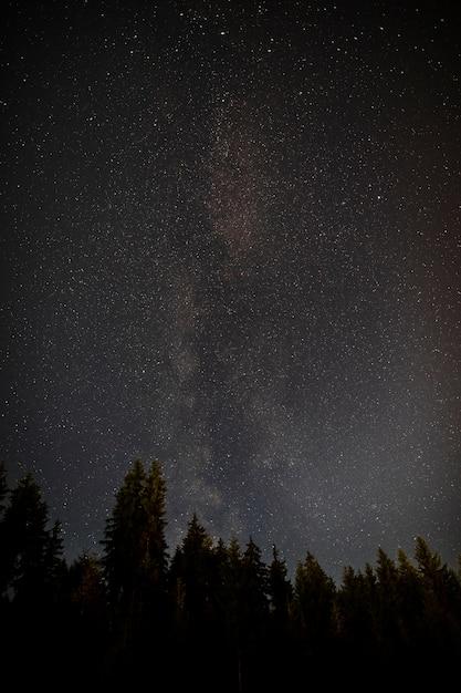 Notte stellata di mezzanotte con foresta di alberi sempreverdi Foto Gratuite