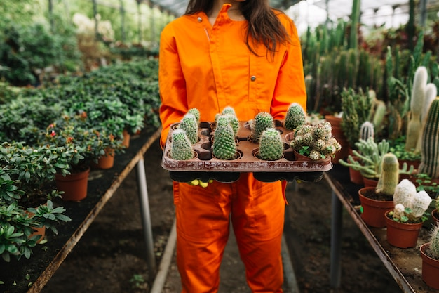 Midsection view of a woman holding succulent plants Free Photo