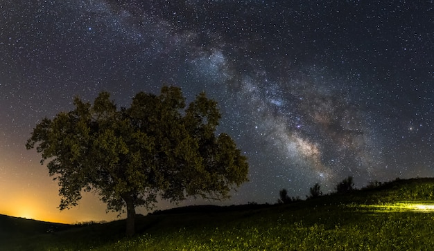 Milky way galaxy on a lonely tree Premium Photo
