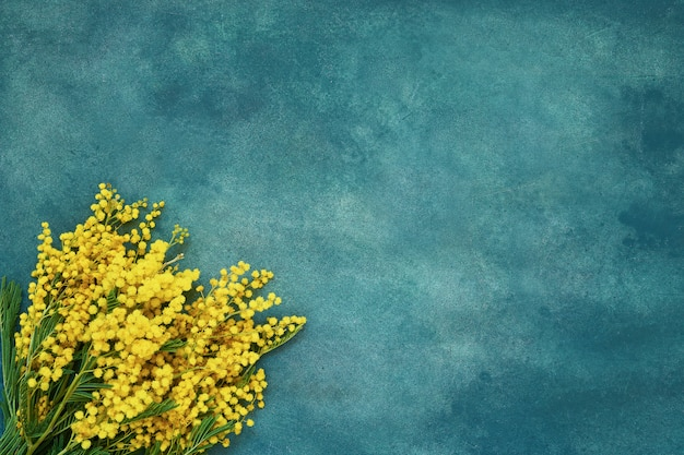 Mimosa flowers bouquet on green background. copy space, top view. Premium Photo