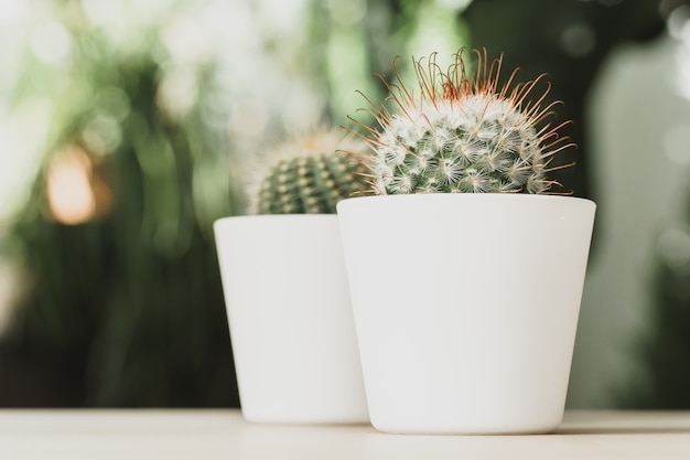 Mini cactus plant potted on blurred botanical garden background Premium Photo